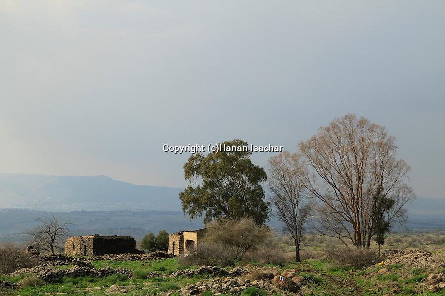 Golan Heights, Yehudiya Forest Nature Reserve
