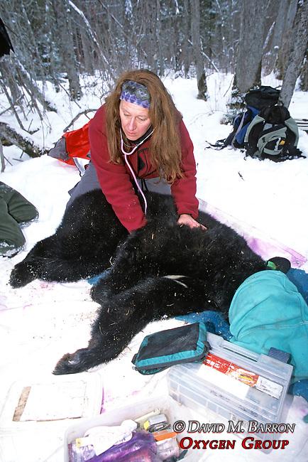 Kris Timmerman Taking Hear Rate From Bear #5