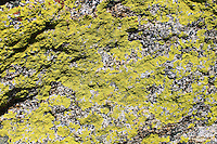 Stock photo: Beautiful vibrant green fungus on rock on Moro rock of Sequoia National park, California.