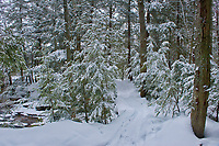 Winter snowfall in forest at Wilson's Falls<br />