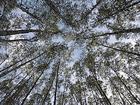 FOREST_LOCATION_90061