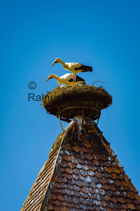 France, Alsace, Haut-Rhin, Rouffach: stork's nest on top of witch tower, former prison | Frankreich, Elsass, Haut-Rhin, Rouffach: Storchennest auf dem Hexenturm, der frueher als Gefaengnis diente