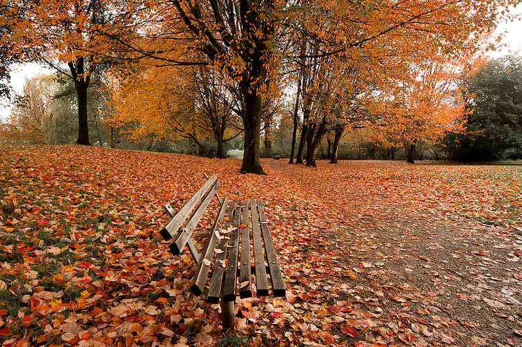 Autumn in the park with wooden bench and trees