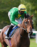 Remedium ridden by Sean Levey goes down to the start of The Radcliffe & Co Novice Median Auction Stakes (Div 2) during Horse Racing at Salisbury Racecourse on 11th September 2020