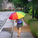 Rainy day scenics of Duke Gardens.