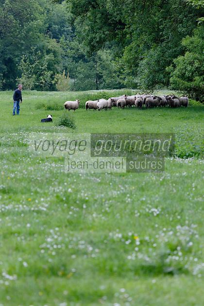 Europe/France/Centre/Indre-et-Loire/Env de Loches/Perrusson: Troupeau de brebis de la Ferme: Exploitation Cornuet/Froidevaux  // // France, Indre et Loire, near Loches: Perrusson: Ewes Farm: Operation Cornuet / Froidevaux<br /> - Auto N: 2013-127
