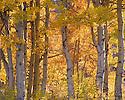 Fall Colors - Near Lake Tahoe