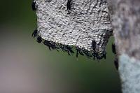 Belo Horizonte_MG, Brasil...Detalhe de vespas do Parque da Mangabeiras...Detail of waps in the Mangabeiras Park...Foto: NIDIN SANCHES / NITRO