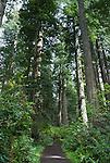 Redwoods, Lady Bird Johnson Grove, Redwood National Park