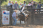 SEBRA - Appomattox, VA - 10.11.15 - Bulls