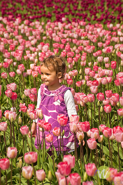 Roozengaarde Tulip Bulb farm, Mount Vernon, WA. Child with bouquet of tulips