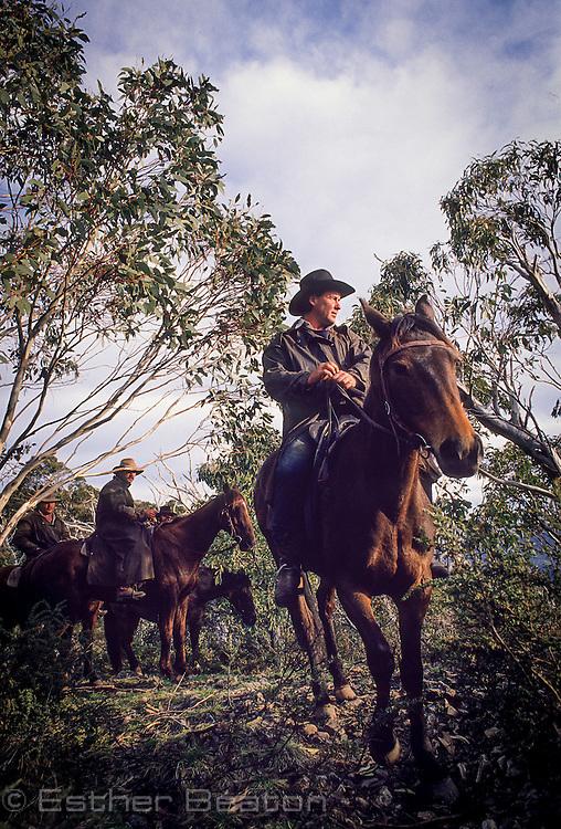 Mountain Cattlemen or stockman, portrait on horse. Near Mt Buller, Snowy Mountains, Victoria.