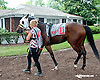 Strikinglybeautiful before The Forever Together Stakes at Delaware Park on 9/11/13