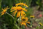 Wildflowers near Lake Irwin, Colorado.