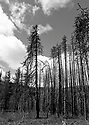 Scenery at Blewett Pass, WA in black and white featuring burned forest, sky and clouds in the Wenatchee Mountains. Stock photography by Olympic Photo Group