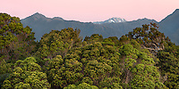 Beautiful native coastal rainforest at twilight, Westland Tai Poutini National Park, South Westland, West Coast, UNESCO World Heritage Area, New Zealand, NZ