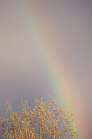 Winter rainbow, Vancouver, BC, Canada