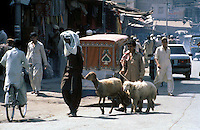 Pakistan  Peshawar  1986..Old City..The sheep brought to the market