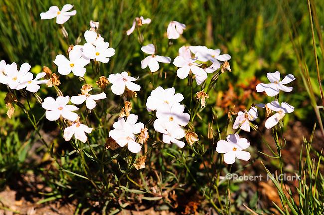 Wildflowers in the Copper Basin in Idaho near Sun Valley