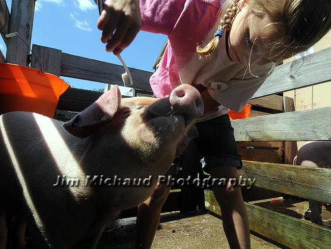Siierra Bowman 9, of Vernon, makes her pig Chuckwagon happy as she scratches the top of his head while preparing him for show, Friday, August 12, 2011, during the first day of the annual Tolland County 4H Fair at the Tolland Agriculture Center in Vernon, The fair runs through Sunday. (Jim Michaud/Journal Inquirer)
