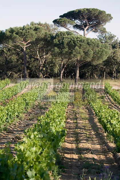 Europe/Provence-Alpes-Côte d'Azur/83/Var/Saint-Tropez: le vignoble AOC Côtes de Provence