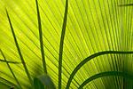 Europa, DEU, Deutschland, Nordrhein Westfalen, NRW, Ruhrgebiet, Bochum, Ruhr-Uni, Botanischer Garten, Pflanze, Blatt, Detail, Kategorien und Themen, Natur, Umwelt, Pflanzen, Pflanzenkunde, Botanik, Biologie, ....[Fuer die Nutzung gelten die jeweils gueltigen Allgemeinen Liefer-und Geschaeftsbedingungen. Nutzung nur gegen Verwendungsmeldung und Nachweis. Download der AGB unter http://www.image-box.com oder werden auf Anfrage zugesendet. Freigabe ist vorher erforderlich. Jede Nutzung des Fotos ist honorarpflichtig gemaess derzeit gueltiger MFM Liste - Kontakt, Uwe Schmid-Fotografie, Duisburg, Tel. (+49).2065.677997, ..archiv@image-box.com, www.image-box.com]