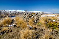 Rocks, Tussock and Spaniard grass on Old Man Range, looking towards Lake Onslow, Central Otago, South Island, New Zealand - stock photo, canvas, fine art print