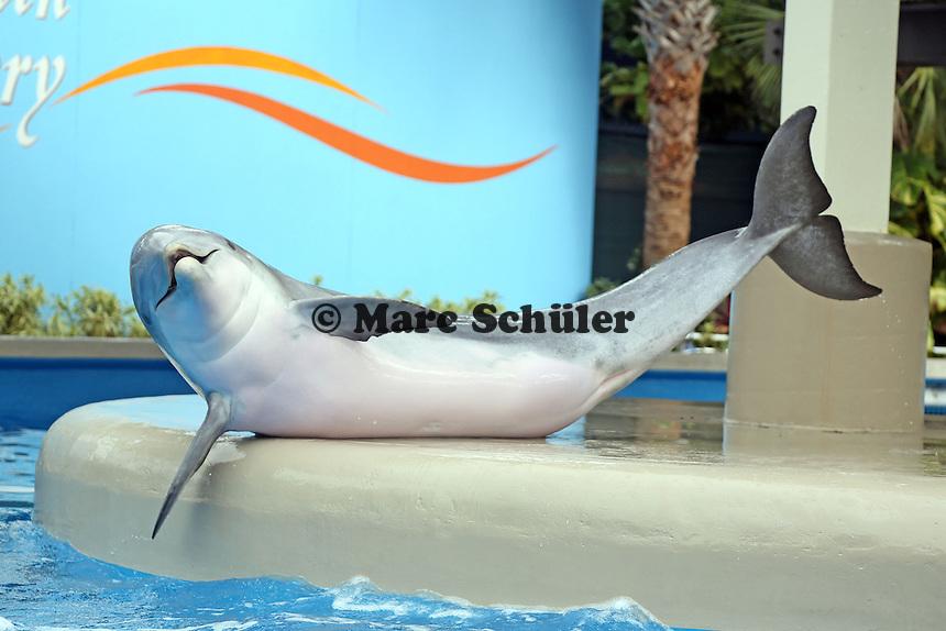 Delfin in der Dolphin Nursery