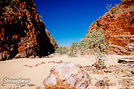 Image Ref: CA545<br />