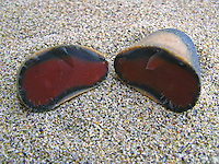 """Roter Feuerstein von Helgoland auch als """"roter Diamant"""" bezeichnet, ist eine weltweite geologische Besonderheit. Während die bekannten Feuersteine des Festlands in der Regel grau bis schwarz gefärbt sind, ist der vor rund 88 Millionen Jahren im Mittelturon der Oberkreide im Bereich der Düne von Helgoland entstandene Flint schon auf erster Lagerstätte innen in verschiedenen Farbvarietäten rot gefärbt, Flintstein"""