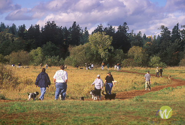 Owners with dogs in Seattle area dog park