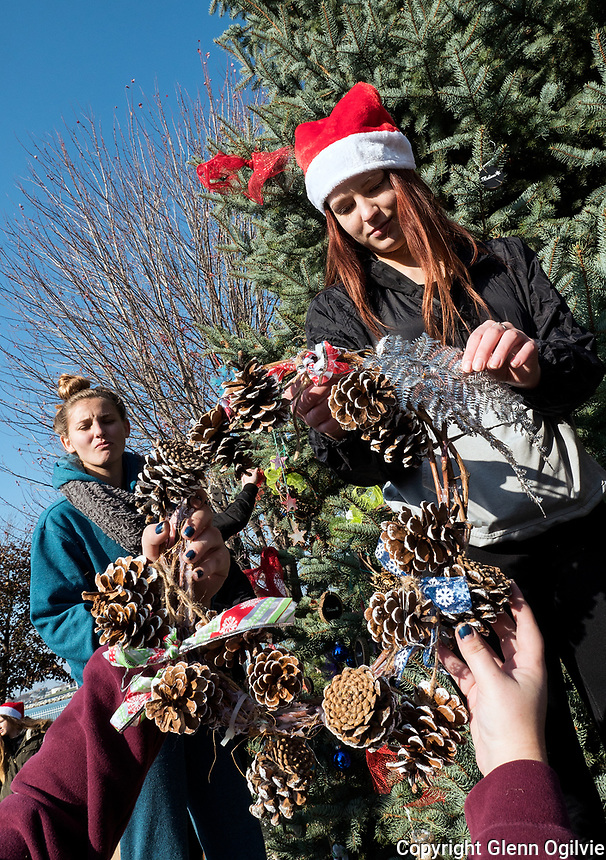 A large group of senior Alexander Mackenzie Secondary School students did their part to help decorate Centennial park for the Celebration of Lights.