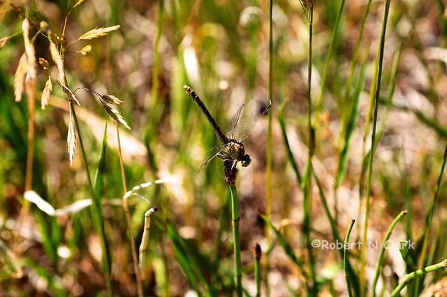 Damsel fly in grass