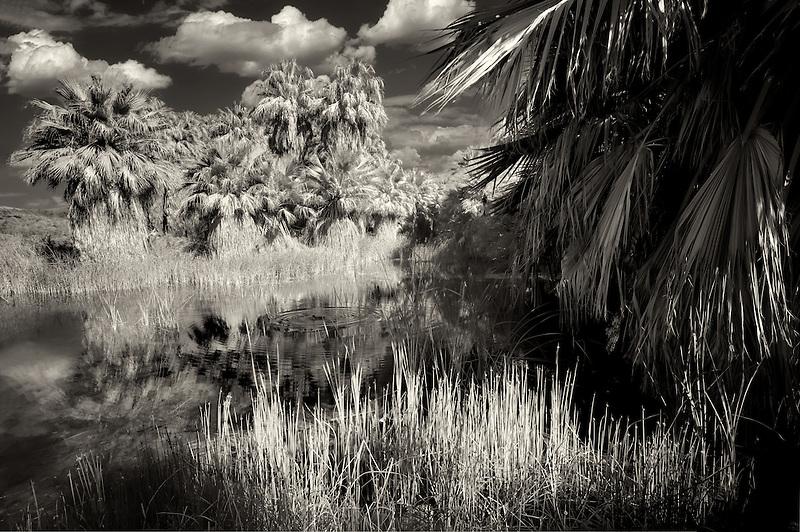 McCallum Pond. Coachella Valley Preserve. California