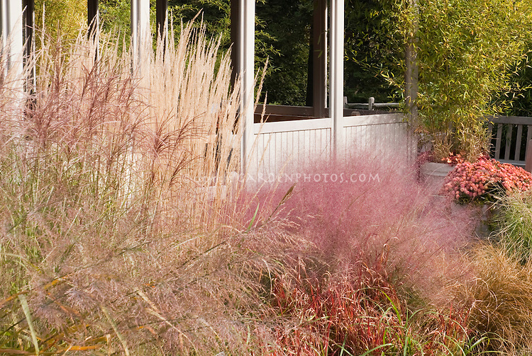 Ornamental Grasses in the Garden in Fall Bloom