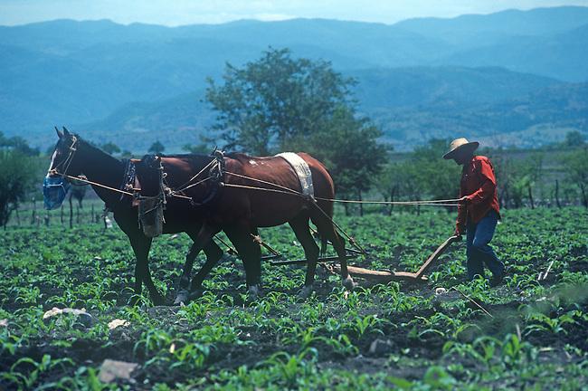 Horse-pulled Plough, Farming, Guanajuato, Mexico