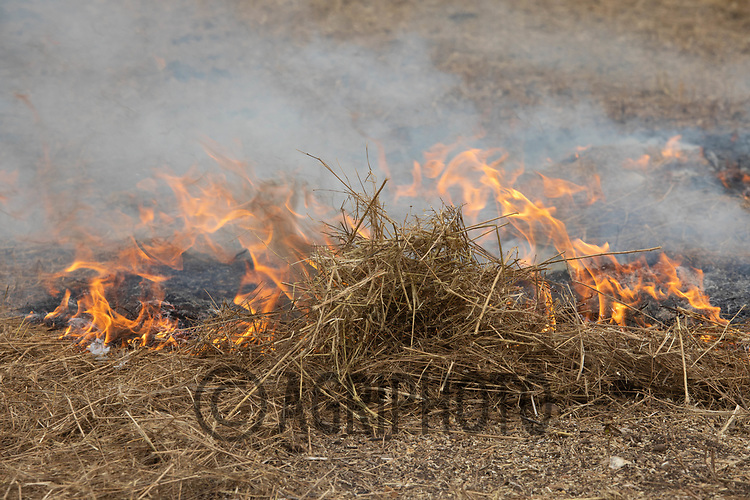 25.7.2020  Burning Linseed straw<br /> ©Tim Scrivener Photographer 07850 303986<br />      ....Covering Agriculture In The UK.