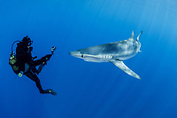 WQ1266-Dm. A Blue Shark (Prionace glauca) approaches a scuba diver with a video camera. This requiem shark species prefers the open ocean and is usually solitary but will aggregate near food sources. Though potentially dangerous to people, many scuba divers enjoy safe encounters with this sleek animal which can grow to lengths of over 12 feet. Azores, Portugal, Atlantic Ocean.<br /> Photo Copyright © Brandon Cole. All rights reserved worldwide.  www.brandoncole.com