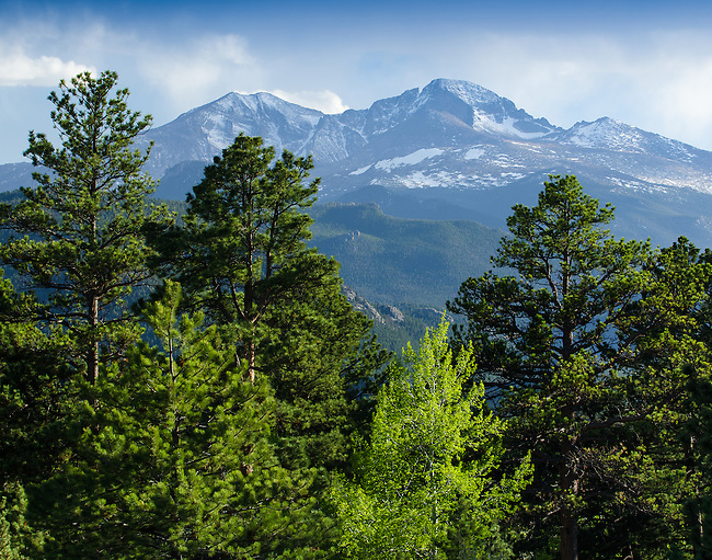 Mount Meeker and Longs Peak through ponderosa pines from Devils Gulch on a spring evening, Rocky Mountains, Estes Park, Colorado, USA