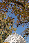 Mount Tabor Oak tree at Sheikh Ibrahim Tomb in Banias, the Golan Heights<br />