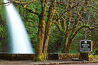 Horsetail Falls plummets over a moss covered cliff, Columbia River Gorge National Scenic Area, Oregon, USA