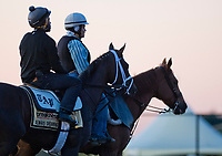 BALTIMORE, MD - MAY 17: Always Dreaming heads to the track to exercise in preparation for the Preakness Stakes this Saturday at Pimlico Race Course on May 17, 2017 in Baltimore, Maryland.(Photo by Scott Serio/Eclipse Sportswire/Getty Images)