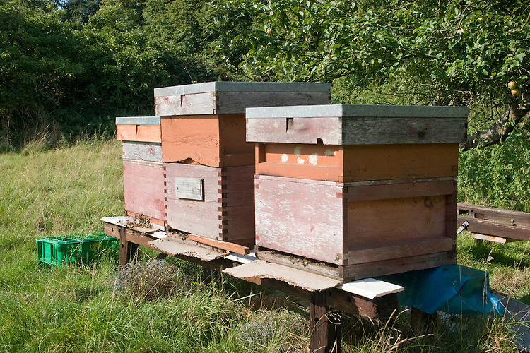 Bee hives in summer orchard