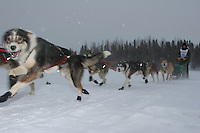 Jr. Iditarod Willow Lake  start / finish  Cassia Condon