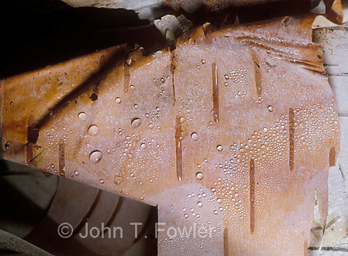 Birch bark backgropund with water droplets<br />
