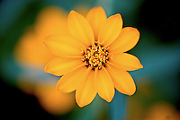 Macro Shot of a Yellow Petaled FLower
