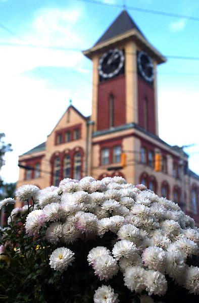 City Hall-mums