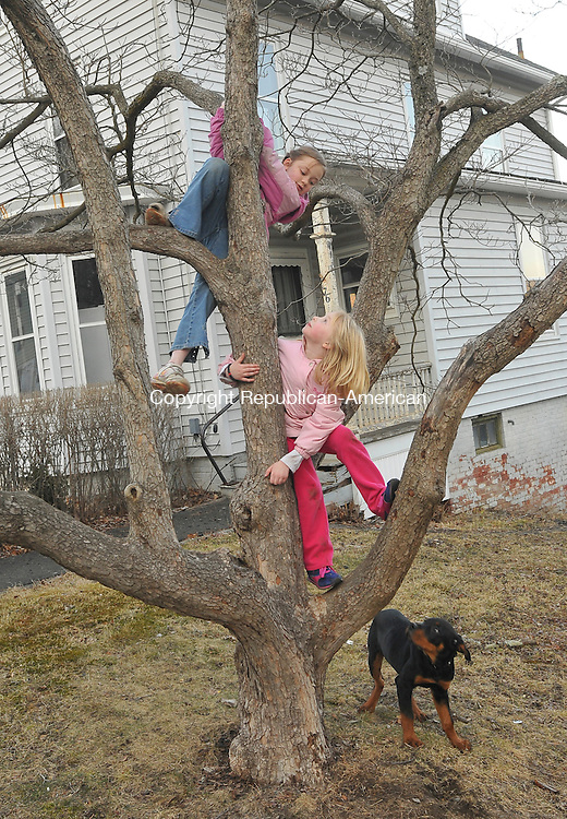 THOMASTON, CT-07 MARCH 2009-030710IP02-Shelby Smith (left), 8, and Susan Mongillo, 6, take advantage of the warmer weather and climb a tree outside their home on Clay St. in Thomaston on Sunday as Shelby's dog Teddy watches.<br /> Irena Pastorello Republican-American