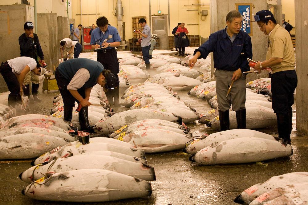 TSUKIJI FISH MARKET IN TOKYO   Tsukiji fish market is the biggest