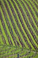 Europe/Europe/France/Midi-Pyrénées/46/Lot/Floressas: Vignoble AOC Vin de Cahors du Château de Chambert